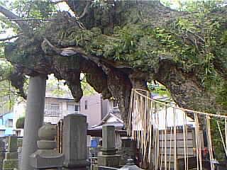 http://www.digistats.net/image/2003_04/chichi.jpg