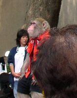 http://www.digistats.net/image/2006_05/nedu3.jpg