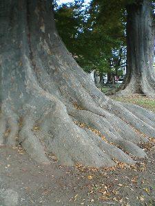 http://www.digistats.net/image/2007_01/hakuchou3.jpg