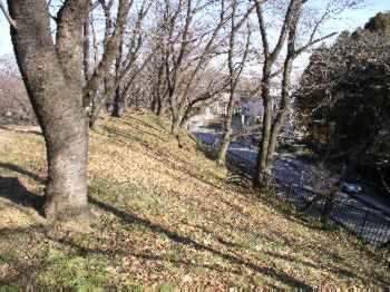 http://www.digistats.net/image/2007_01/kiji.jpg