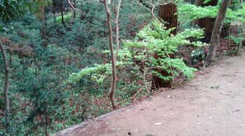 http://www.digistats.net/image/2011/02/iidaka_01.jpg