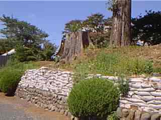 http://www.digistats.net/image/m/tky.jpg