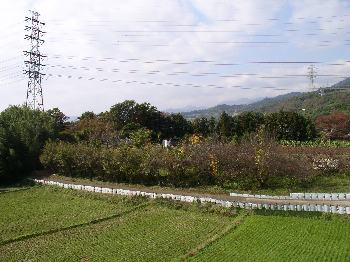 http://www.digistats.net/usakoji/image/hatano_j_2.jpg
